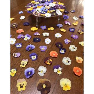 ② 銀の紫陽花が作った彩りビオラのドライフラワー超山盛り80冠‼️(ドライフラワー)