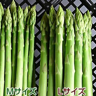 A品 アスパラM~L 500g アスパラガス 採りたて野菜(野菜)