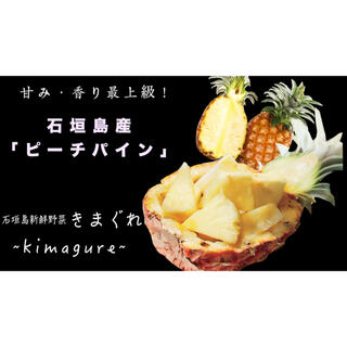石垣島産「ピーチパイン」2kgまとめ売り(フルーツ)