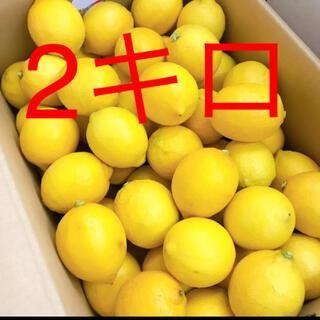 和歌山産 レモン 2キロ(フルーツ)
