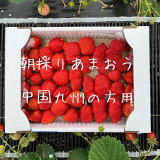中国九州の方向け 朝採りいちご あまおう 二級品(フルーツ)