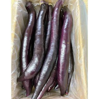 熊本県産 黒紫大長なす 5キロ 送料込(野菜)