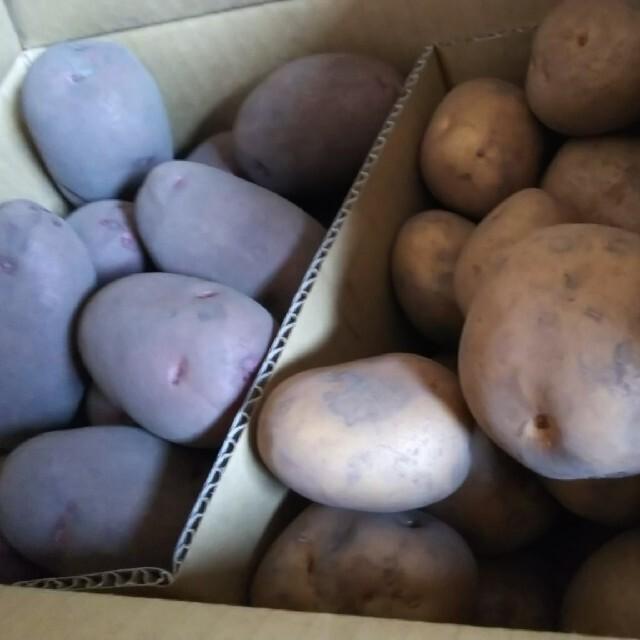 じゃがいも インカのめざめ レッドムーン 1.5kg前後セット 食品/飲料/酒の食品(野菜)の商品写真