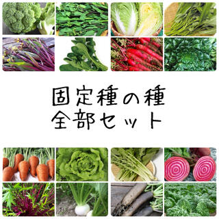 ★伝統野菜★固定種の種全部セット(野菜)