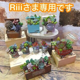 多肉植物の寄せ植え ミニセット     通常価格2600円(その他)