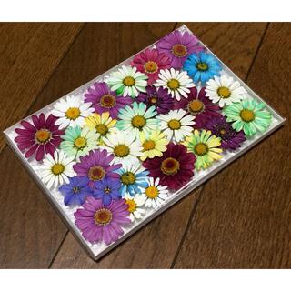 p①  銀の紫陽花が作った春色マーガレットのお詰め合わせです‼️(ドライフラワー)