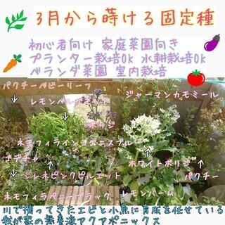 3月に蒔ける固定種 野菜の種 ハーブの種 エディブルフラワー 水耕栽培 家庭菜園(野菜)