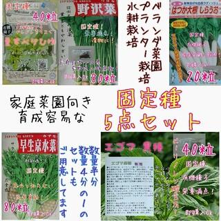 固定種 5点セット 野菜の種 ハーブの種 水耕栽培 家庭菜園 エディブルフラワー(野菜)
