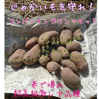 じゃがいも コンパニオンプランツセット 雑草防除 病害虫忌避 土壌改良 景観美化(野菜)