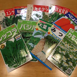 野菜の種 6種類 家庭菜園 うち様専用(野菜)