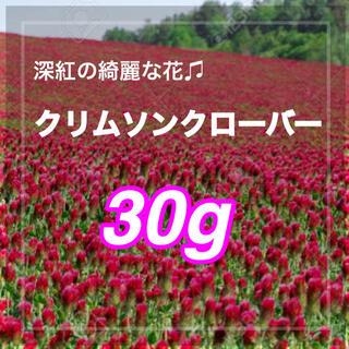 【最安値】30g 約9000粒ストロベリーキャンドル、クリムソンクローバー(その他)