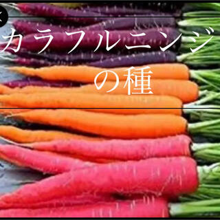 オレンジ 黄色 紫 3色MIXニンジンの種野菜種 30個(野菜)
