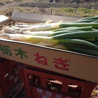 ヒロ様専用(野菜)