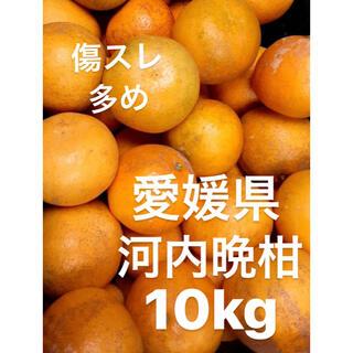 訳あり 愛媛県 小玉 宇和ゴールド 河内晩柑 15kg(フルーツ)