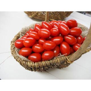 ミニトマト 「アイコ」 熊本県産 1k 送料込 ①(野菜)