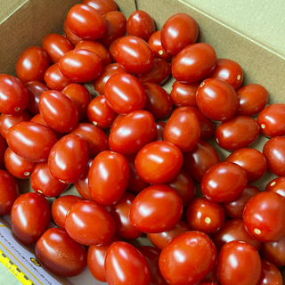 ミニトマト 「アイコ」 熊本県産 1k 送料込 ②(野菜)