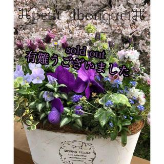 ★春苗の寄せ植え★gathering風★ビオラとラベンダー★❣️(プランター)