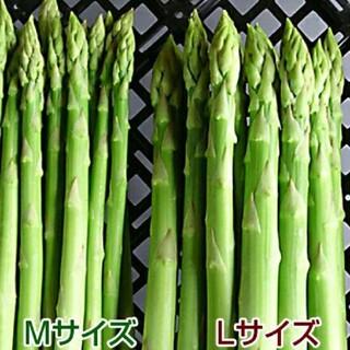グリーンアスパラ 500g アスパラガス 採りたて野菜(野菜)