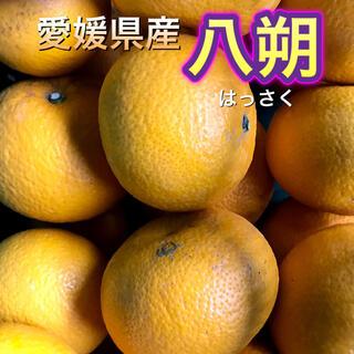 32601 愛媛県産 訳あり 八朔 10kg はっさく 送料込み(フルーツ)