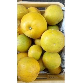 香川県 柑橘みかん 安政柑 5キロ サイズ混合(フルーツ)