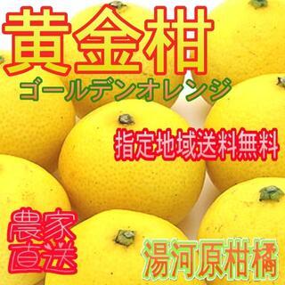 ゴールデンオレンジ 黄金柑 約4.5k 🍊ご家庭用♪ 防腐剤なし 訳あり不選別(フルーツ)