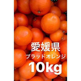 愛媛県 ブラッドオレンジ 10kg(フルーツ)