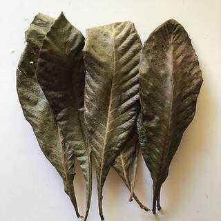 自然乾燥無農薬枇杷の葉 25枚(健康茶)
