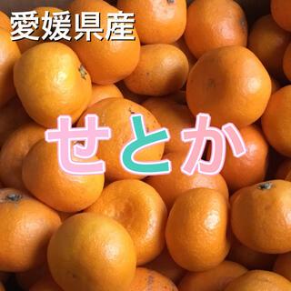 32601 愛媛県産 訳あり せとか 2kg 柑橘 送料込み(フルーツ)