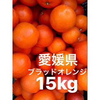 愛媛県 ブラッドオレンジ 15kg(フルーツ)