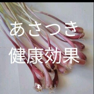 北海道無農薬安心 あさつきの苗 球根 かわいい球根 70個以上〜(野菜)