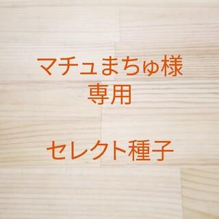 マチュまちゅ様専用 セレクト種子18袋(野菜)