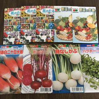春蒔き 野菜の種7種(野菜)
