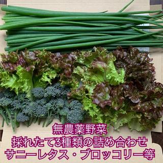 無農薬野菜*採れたて3種類の詰め合わせ*野菜セット*サニーレタス・ブロッコリー(野菜)