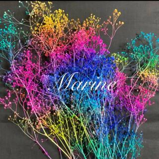 専用❤夏色 ソフトミニかすみ草 竜宮城 10g ハーバリウム花材(プリザーブドフラワー)