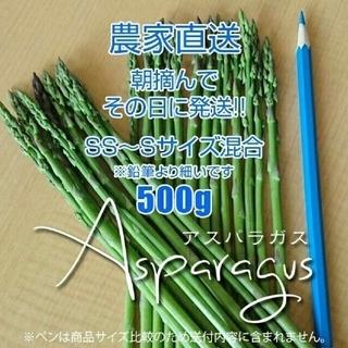 細アスパラ 500g アスパラガス 新鮮野菜(野菜)