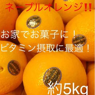 カリフォルニア産 ネーブルオレンジ 約5kg(フルーツ)