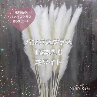パンパスグラス 白15本入り 送料込み ドライフラワー 観葉植物 ホワイト(ドライフラワー)