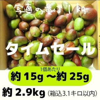 [セール緑]約2.9キロ グリーンマンゴー 青マンゴー 加工用 マンゴー(フルーツ)