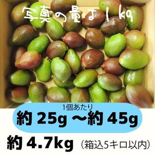 [青5-1]約4.7キロ グリーンマンゴー 青マンゴー 加工用 マンゴー(フルーツ)