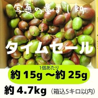 [セール緑]約4.7キロ グリーンマンゴー 青マンゴー 摘果マンゴー 加工用(フルーツ)