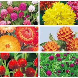 anon様専用花種6種セットおまけつき、花種5種セット(その他)