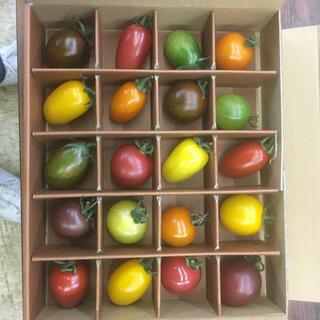 熊本県産カラフルミニトマト3キロ(野菜)