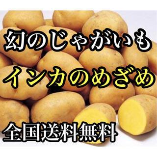 北海道産幻のじゃがいも インカのめざめ宅急便コンパクト満杯詰約1.4キロ送料無料(野菜)