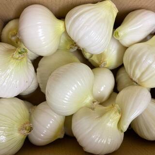 【訳あり】新玉ねぎ 無農薬 熊本県天草産 大小MIX 4K 送料込み(野菜)