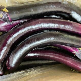 熊本県産  大長なす Sサイズ  3キロ  送料込(野菜)