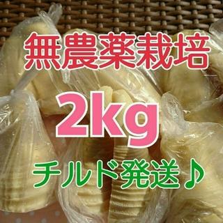 【チルド発送♪】和歌山県産 孟宗たけの子 水煮 2kg+500g増量中‼️‼️(野菜)
