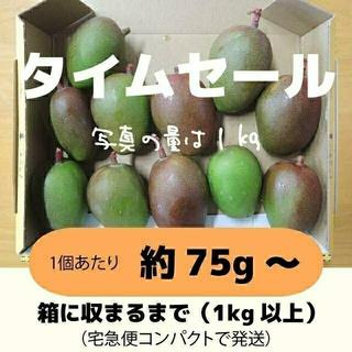 [セール:橙]1キロ以上 グリーンマンゴー 青マンゴー 加工用 マンゴー(フルーツ)