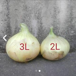 淡路島新玉ねぎ(野菜)