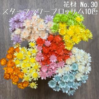 花材 No.30 スターフラワー・ブロッサム10色セット(ドライフラワー)