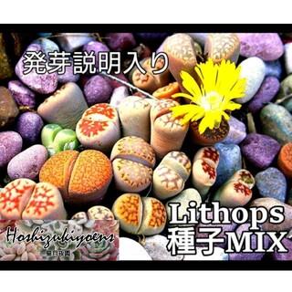 リトープス ミックス種子 35粒+α 発芽説明入り(その他)